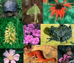 22 мая — Международный день биологического разнообразия