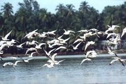 12 мая 2012 — Всемирный день мигрирующих птиц