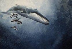 23 июля — Всемирный день китов и дельфинов