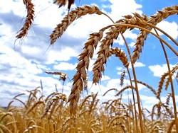 14 октября 2012 — День работника сельского хозяйства и перерабатывающей промышленности
