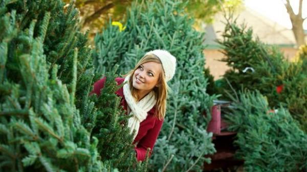 Новогоднее дерево: искусственная или натуральная елка?
