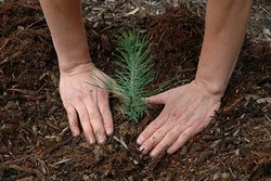 11 мая 2013 — Всероссийский день посадки леса