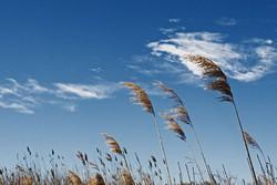 15 июня — Всемирный день ветра