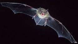 20 сентября — Международная ночь летучих мышей