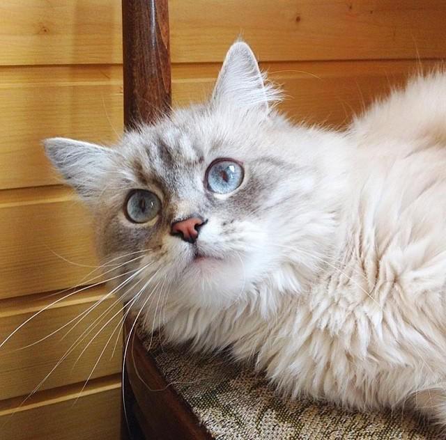 Выезд ветеринара на дом: как быстро помочь питомцу